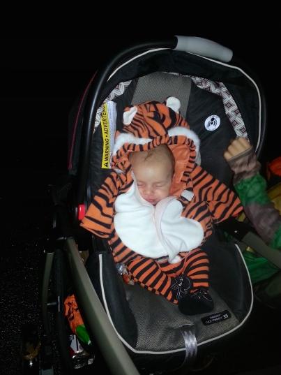 Crouching, Sleeping, Hidden Tiger