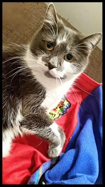 """Cat Photobomb:  """"For Me?"""""""