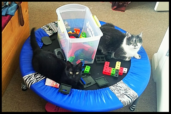 Cats, buliding blocks, trampoline