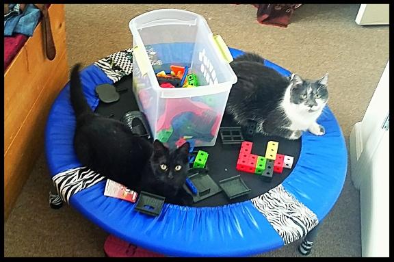 Cats, buliding blocks, trampoline
