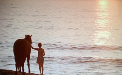 black-stallion-friendship