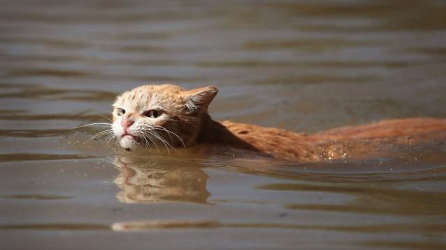 angry harvey cat
