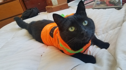 2017-10-28 11.04.23 kitten.jpg