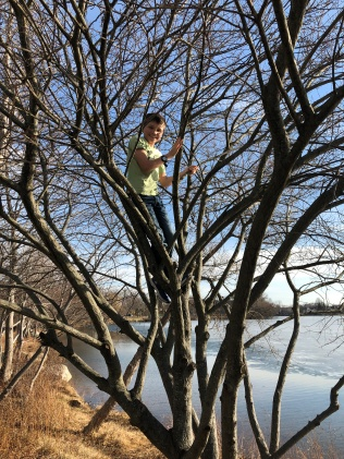 2018-02-20 14.33.26 Miles in a Tree
