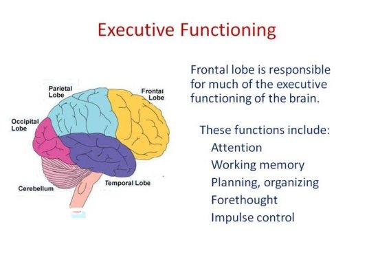 ExecutiveFunctionBrain
